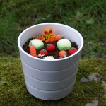 edible plant pot