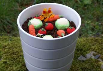 edible plant pots