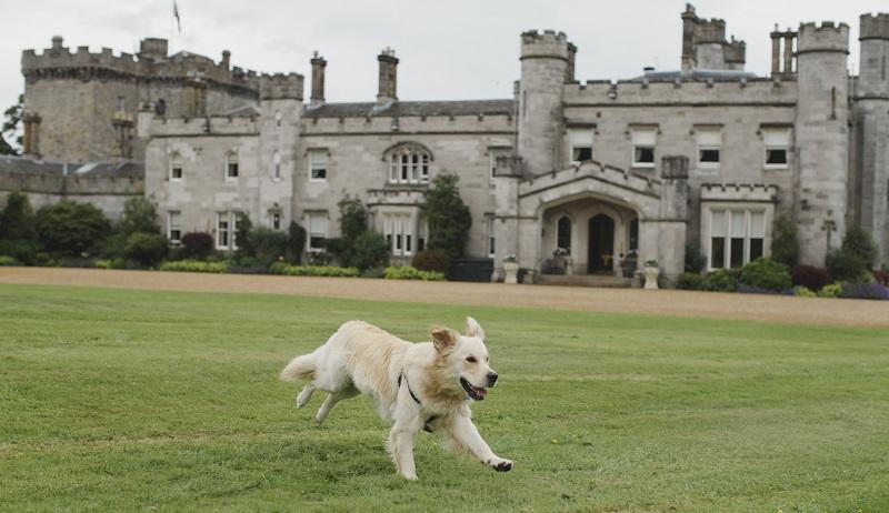 Dundas Castle Ambassadog Visit 6